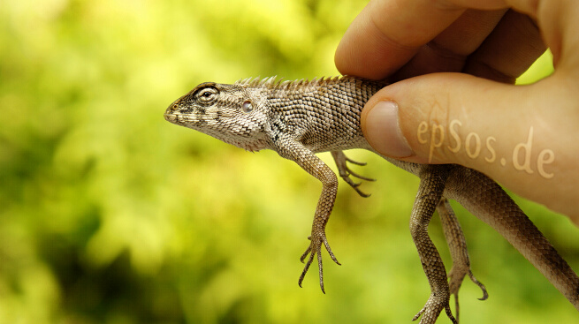 Beautiful picture of the reptile lizard.