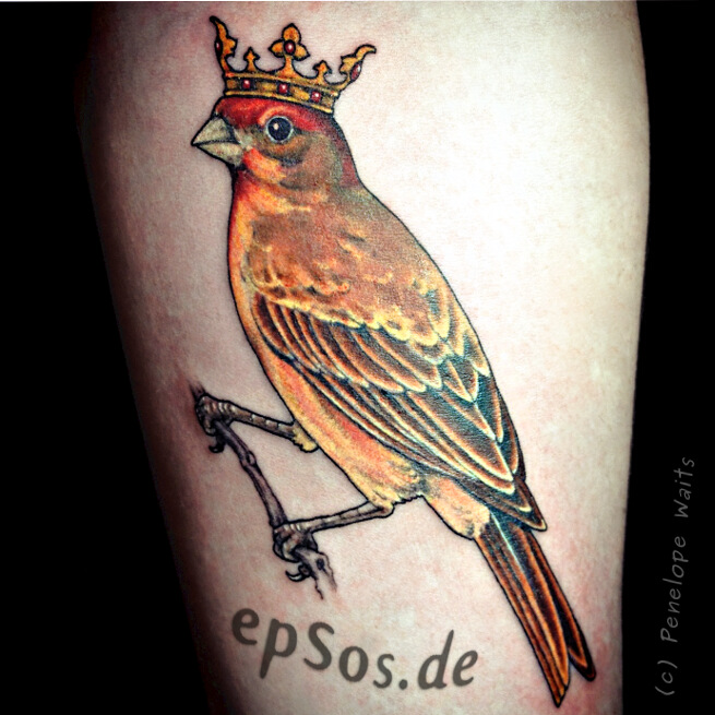 Bird tattoos designs ideas for best tatoos.
