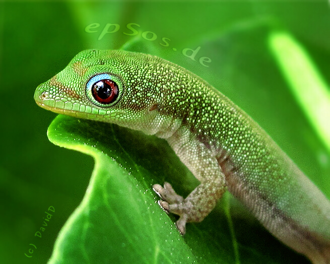 Happy green gecko with cute reptile smile.